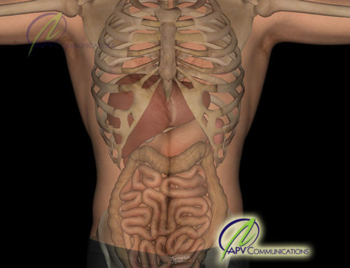 Gastrointestinal Tract Illustration